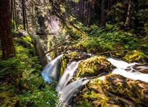 Обои США Парки Водопады Мосты Деревья Sol Duc Falls Olympic Природа фото