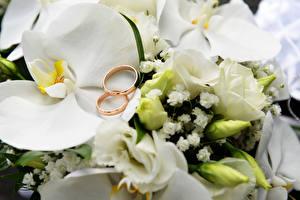 Обои Орхидеи Кольцо Белый цветок