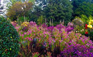 Обои Сады Космея Природа