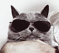 Фотографии Кошки Морда Очки Животные Юмор