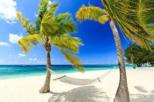 Обои Тропики Побережье Пейзаж Пальмы Песок Деревья Природа фото