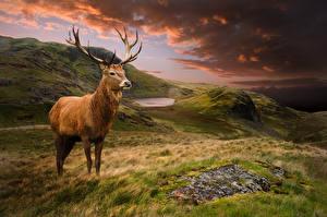 Фото Пейзаж Олени Облака Трава животное