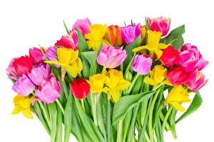 Фото Букеты Тюльпан Нарциссы Белом фоне цветок