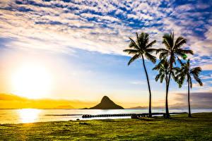 Обои США Пейзаж Рассветы и закаты Побережье Гавайи Пальмы Облака Солнце Природа фото