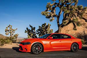 Картинка Додж Оранжевый Металлик Сбоку 2015–16 Charger R-T Scat Pack Авто