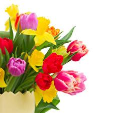 Фото Букет Тюльпан Нарциссы Белым фоном Цветы