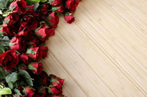Фотографии Розы Бордовый Шаблон поздравительной открытки Цветы