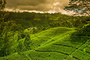 Фото Шри-Ланка