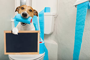 Фотография Собаки Джек-рассел-терьер Смотрит Шаблон поздравительной открытки Туалет Смешные Животные