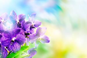 Фотографии Орхидея Вблизи Фиолетовых цветок