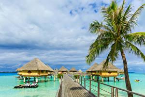 Фото Французская Полинезия Тропики Пристань Бора-Бора Бунгало Пальмы