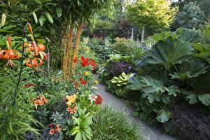 Обои Англия Сады Лилии Walsall Garden Природа фото