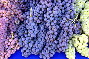 Обои Виноград Крупным планом Еда