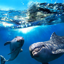 Картинки Подводный мир Дельфины Волны Вода Двое животное