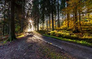 Обои Леса Дороги Осень Лучи света Деревья Природа фото
