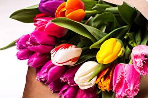 Обои Букеты Тюльпаны Крупным планом Цветы фото