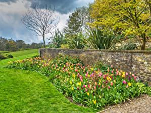 Обои Англия Сады Тюльпаны Забор Газон Standen House and Garden Природа фото