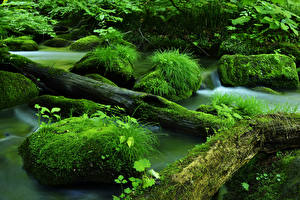 Фотография Река Ствол дерева Мох Траве Зеленая Природа