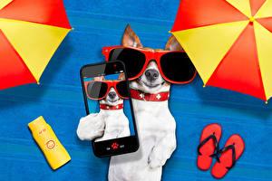 Фотография Собаки Джек-рассел-терьер Смартфон Очки Цветной фон Селфи Смешной животное