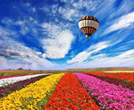 Картинка Поля Лютик Небо Облака Аэростат Цветы