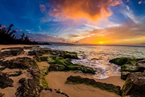 Обои Рассветы и закаты Побережье Тропики Небо Камни Пейзаж США Океан Гавайи Мох Природа фото