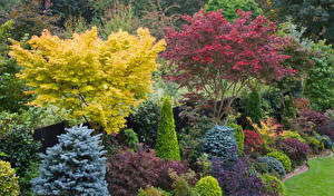 Обои Англия Сады Кусты Walsall Garden Природа фото