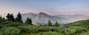 Фото Украина Пейзаж Горы Карпаты Кусты Ель