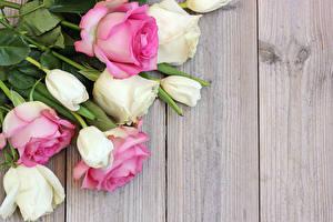 Обои Розы Тюльпаны Крупным планом Шаблон поздравительной открытки Доски Цветы фото