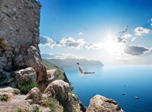 Фотография Крым Россия Море Камень Чайка Небо Облака Природа