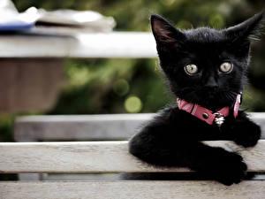 Обои Черный Котята Взгляд Животные фото