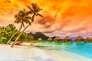 Обои Побережье Тропики Море Пальмы Бунгало Природа фото