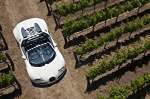 Обои BUGATTI Белый Кабриолет Сверху 2008-12 Veyron Grand Sport Roadster Автомобили фото