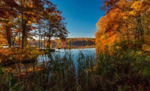 Обои США Осень Озеро Деревья Трава Ice Lakes Colorado Природа фото