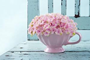Обои Гортензия Розовый Цветы фото