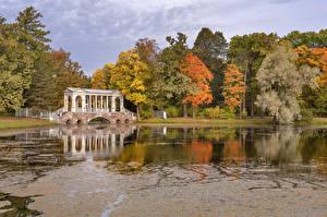 Фотография Россия Парки Пруд Осень Мосты Деревья St. Petersburg Pavlovsk Природа