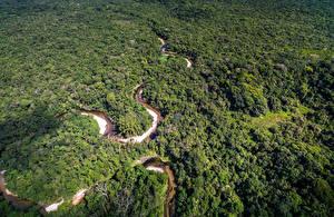 Обои Бразилия Леса Реки Сверху Amazon Jungle Природа