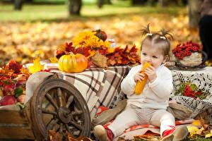 Картинка Осень Тыква Кукуруза Девочки Листва Ребёнок