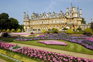 Фотография Англия Парки Бегония Дворец Газон Waddesdon Manor Города