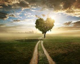 Обои Пейзаж Поля Небо Дороги Деревьев Сердце Облачно Природа