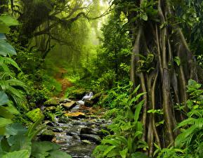 Картинка Тропический Таиланд Лес Камень Мох Тропинка Jungle Природа