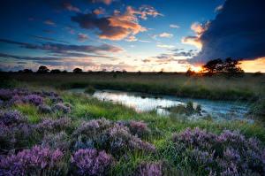 Обои Пейзаж Рассвет и закат Небо Облака Траве Болото Heather Flowers Природа