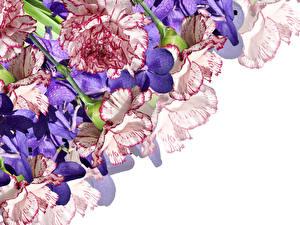Фотографии Орхидея Гвоздики Вблизи Белом фоне цветок
