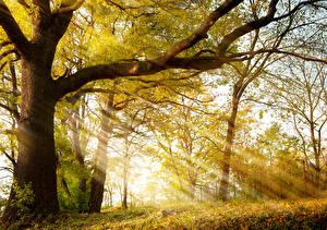 Обои Времена года Осень Деревья Лучи света Ветки Ствол дерева Природа фото