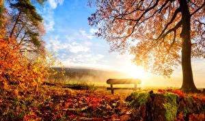 Фотография Времена года Осень Пейзаж Деревья Листья Скамейка Природа