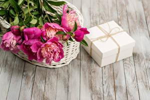 Фото Пионы Подарки Коробка Цветы