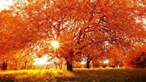 Обои Времена года Осень Деревья Лучи света Трава Природа фото