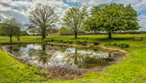 Обои Англия Весна Пруд Деревья Трава Bishop Auckland Природа
