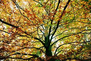 Обои Времена года Осень Деревья Листья Ветки Природа фото