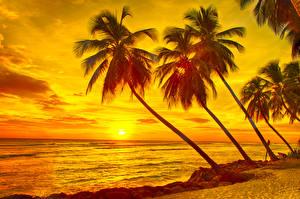 Обои Тропики Рассветы и закаты Пейзаж Побережье Пальмы Barbados Caribbean Природа фото