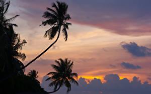 Фотографии Мальдивы Рассветы и закаты Пальмы Облака Силуэт